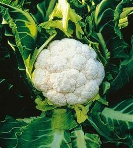 Stegt blomkåls-couscous